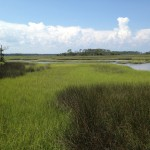 Serenity on a Florida Savannah